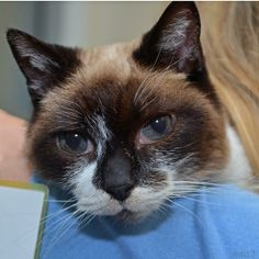Want a little kitty-love in your life?  Precious has a ton of love to give.