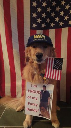 Riker, the Golden Retriever, says hello to his owner at Navy bootcamp. What a good dog, wearing that hat!  America Flag USA