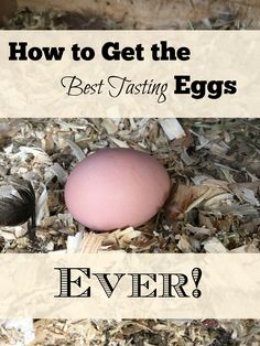 The quality of your farm fresh eggs is directly related to the care amp; feeding you put into your flock. Find out how to get your best tasting eggs ever! Best Egg Laying Chickens, Raising Backyard Chickens, Backyard Poultry, Keeping Chickens, Backyard Farming, Poultry House, Laying Hens, Portable Chicken Coop, Chicken Coop Plans