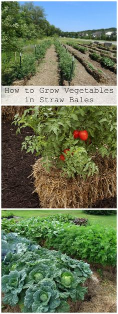 How to Grow Vegetables in Straw Bales