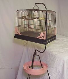 I think everyone back then had a parakeet/budgie.  We had one also.