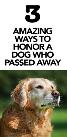 3 Amazing Ways to Honor a Dog Who Passed Away http://iheartdogs.com/3-amazing-ways-to-honor-a-dog-that-has-passed-away/