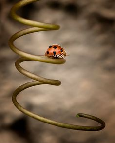 ♂ Beautiful nature macro photography ladybug