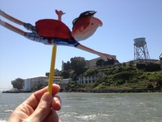 Here's Barnaby making a quick escape from Alcatraz Island. Floating has its perks! John Boyne, Fair Grounds, Island, Travel, Block Island, Voyage, Trips, Viajes, Islands