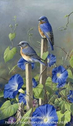 "©James Hautman  ""Bluebird Glories"""