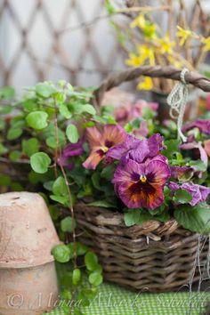 blomsterverkstad   Livet med trädgård, uterum och växter   Sida 2
