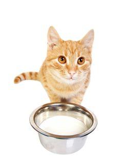 Diabetic Dog Food Petsmart