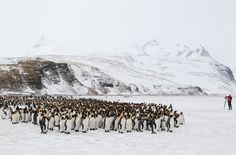 2013-4-06 · Real Life March of the Penguins