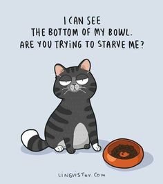 My cats will act like they're starving right after I've fed them. I feed them extra, too! Funny Cats, Funny Animals, Cute Animals, Funny Horses, 9gag Funny, Crazy Cat Lady, Crazy Cats, I Love Cats, Cool Cats