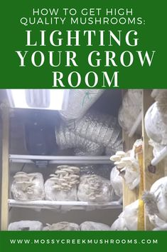 Good lighting is essential to growing high-quality mushrooms for your home based mushroom business. Growing Mushrooms At Home, Garden Mushrooms, Edible Mushrooms, Wild Mushrooms, Stuffed Mushrooms, Mushroom Grow Kit, Mushroom Fungi, Mushroom Cultivation, Grow Room