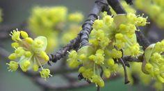 Semne de primăvară în Grădina Botanică