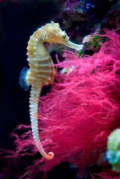 SEAHORSE - lunar masculine, bravery, Neptune, protection, persistence, contentment, generosity, sharing, patience, serenity, diligence, slowing down