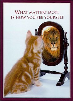 Learn how to be the cat...The Top 5 Secrets to Self-Improvement: Gain the Confidence You Need to be Successful this Year