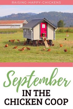 Wondering what September is like in the chicken coop? First, it's time to do a deep clean of the coop. During September it's a good time to check the coop's ventilation which will become an important part of maintaining a healthy flock in the winter. These and more September chicken coop preparation tips are covered in more detail in this article. #raisinghappychickens #septemberchickens