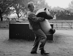 IlPost - Col panda in braccio - Heini Demmer riporta il cucciolo di panda gigante Chi-Chi nella sua gabbia allo zoo di Londra dopo la sua fuga, nel 1958 (Frank Martin/BIPs/Getty Images)