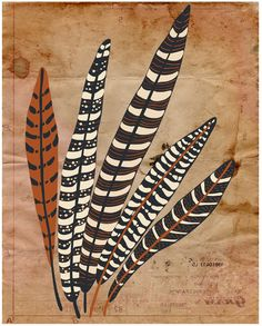 "Feather Print Modern Art Poster ""Five Fine Feathers""  11x14 Brown Vintage Inspired Wall Decor. $21.00, via Etsy."