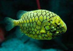 Strange marine fish.  Is this one that's bioluminescent?