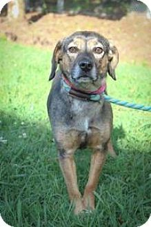 Chattanooga, TN - Hound (Unknown Type) Mix. Meet Frannie, a dog for adoption. http://www.adoptapet.com/pet/16243503-chattanooga-tennessee-hound-unknown-type-mix