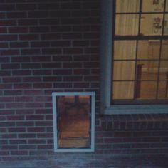 Framed in pet door option 1 boat stuff pinterest pet door door dog in brick wall diy dog bath solutioingenieria Choice Image