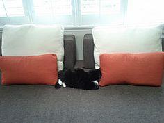 purfect fit Floor Chair, Throw Pillows, Flooring, Bed, Furniture, Home Decor, Gatos, Toss Pillows, Decoration Home
