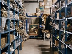 A Mausoleum for Endangered Species - The New York Times. Most are seized contraband of endangered species.