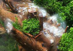 Alga tájékoztató, alga elleni védekezés Green Aqua Aquascaping, Aquarium, Seaweed, Butterflies, Goldfish Bowl, Aquarium Fish Tank, Aquarius, Fish Tank