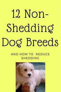12 Non Shedding Dog Breeds / reduce shedding / cleaning tips / nutrition