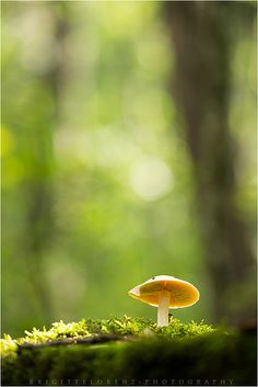 a walk in the forest...... | Flickr - Photo Sharing!