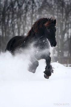 Black beauty in a white wilderness