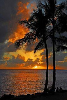 Tropical Paradise  ♕ LadyLuxury♕