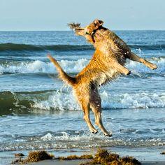 Yippee!  I'm on Galveston Island!