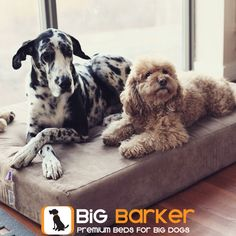 "America's most luxurious dog bed.  Made specifically for big dogs, learn more here:  https://bigbarker.com | ""Mia (the Great Dane) and Troy on their new bed. Can't tell you how many beds we've gone through. So relieved the search for the right one is finally over. Thanks!"""