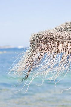 A Touch Of Delicacy, Ibiza, Islas Baleares, Spain Summer Breeze, Summer Beach, Summer Vibes, Summer Fresh, Summer Travel, Summer Sun, Ibiza Strand, Ibiza Beach, Parasols