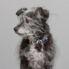 Purchase online textile and brass dog collar lovingly handmade in Melbourne, Australia by Animals In Charge. Pet Supply Stores, Large Animals, Greatest Adventure, Textile Prints, Jaipur, Cotton Canvas, Animal Rescue, Pet Supplies, Your Dog