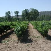Los Pagos: Pinar, Vallejondo y Tomillares. De cada uno, una uva seleccionada para cada tipo de vino de la bodega