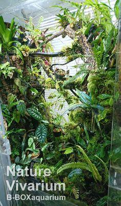 Nature Aquarium, Planted Aquarium, Aquarium Fish, Reptile Habitat, Reptile Room, Gecko Vivarium, Whites Tree Frog, Gecko Terrarium, Indoor Water Garden