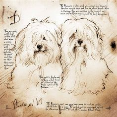 daVinci-Style Havanese Note Cards/2 Designs Available