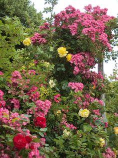 trellis flowers, Chateau Chattonierre
