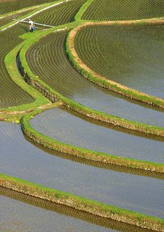 和歌山、棚田、田んぼ/The Ricemaker