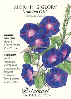 $1.99 An old-fashioned variety with stunning color, brought to America from Bavaria in the 1870s. HEIRLOOM.