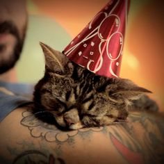 In case you forgot, this is Lil Bub, the most amazing cat on the planet. | Mike Bridavsky, AKA Lil Bub's Dude, Is Hot And We Need To Talk About It