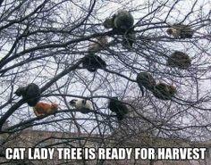 Cat lady tree Meme -
