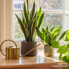 Learn how to create a beautiful indoor garden using the best houseplant for your light levels, humidity, and location. Turn your home into an oasis of green using these tips for growing an indoor garden. #indoorgardening #houseplants Air Plants, Indoor Plants, Cold Frame, Winter Light, Hanging Pots, Plastic Pots, Plant Shelves, Snake Plant, Types Of Plants