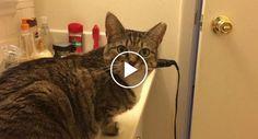 Gato Reage De Forma Hilariante Sempre Que o Seu Dono Lhe Pergunta Se Tem Fome