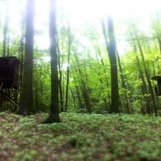 les plný posedů #scary