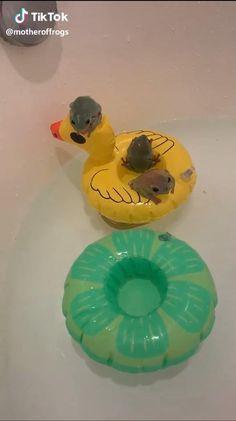 Splish Splash I'm takin a bath