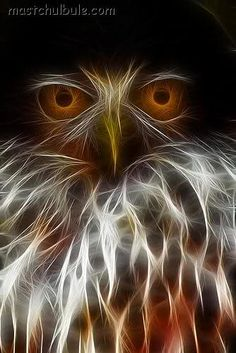 fractal animal | AWESOME WILDLIFE: 30 Animal Fractalius Photos