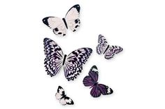 Romantic, Purple and butterflies are my favourite creature.