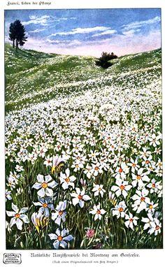 spring flowers, field, design squish blog