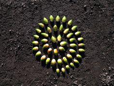 """Land Art"" acorn spiral"